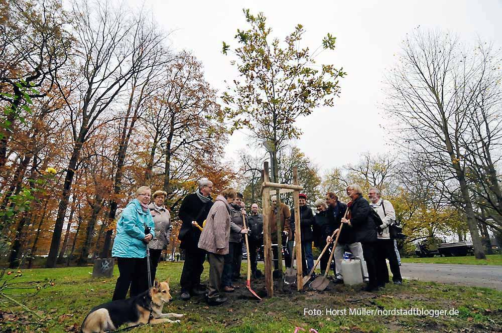 Eine Traubeneiche, Baum des Jahres 2014, pflanzt am 20 November der Freundeskreis Fredenbaumpark nahe des Eingangsbereichs an der Schützenstraße. Traditionell spendiert der  Freundeskreis den Baum des Jahres und erweitert somit den Baumlehrpfad.