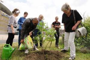 Die Initiative Garten statt ZOB setzt einen Bienenbaum - spontane Hilfe beim Hacken und Schaufeln ermöglichen eine schnelle Pflanzaktion.
