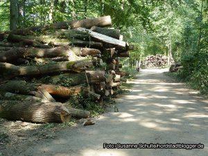Abholzaktion im Hoeschpark. Foto: Susanne Schulte